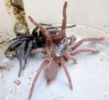 Arachnophobia!